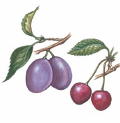 Плоды 2152 кб
